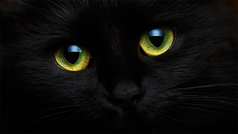 black cat, Friday the 13th, bad luck, close up cat