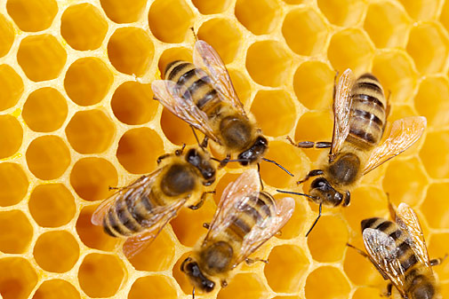 awareness-of-environmental-concerns-affecting-honey-bees