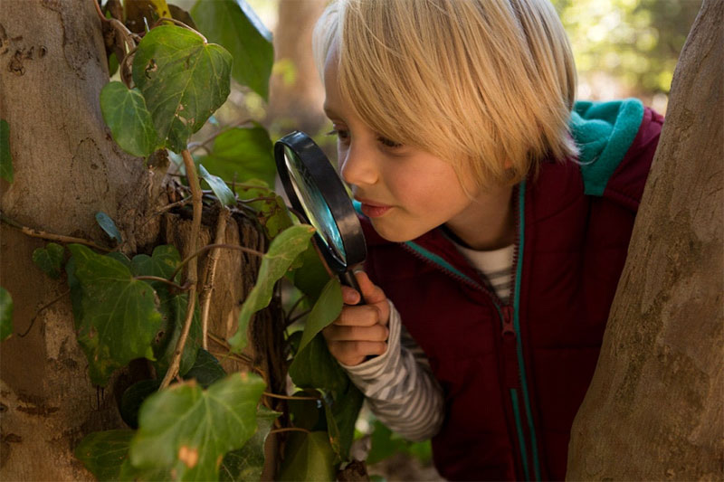 child girl explore trees with magnifying glass in forest